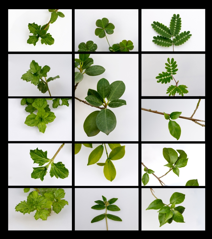 Contact-Sheet---Plant-(Subject-vs.-Background)
